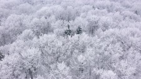 sníh : Aerial view of fairy snow covered trees in winter