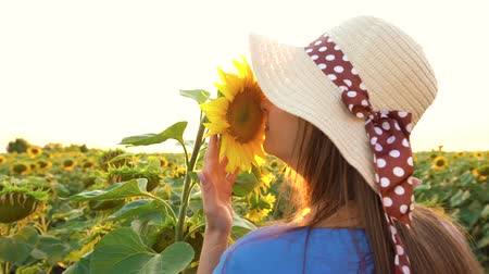 nicely : Woman in a blue dress and hat sniffs and examines a sunflower in the field. Agriculture. Harvesting Stock Footage