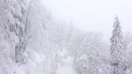 köknar ağacı : Aerial view of snow covered trees in the mountains in winter Stok Video