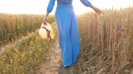 organik gıda : Woman in a blue dress walks across the field and touches the ears of wheat with her hand at sunset light