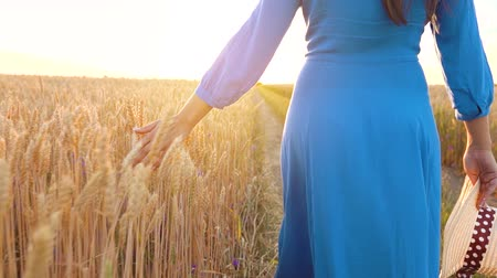 kenyér : Woman in a blue dress walks across the field and touches the ears of wheat with her hand at sunset light. Slow motion