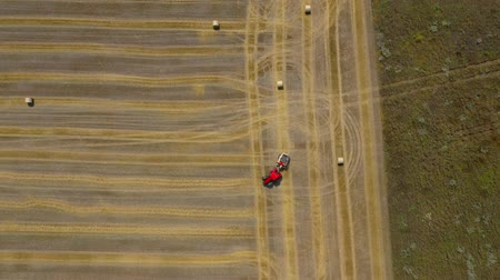 combinar : Aerial view of haymaking processed into round bales. Red tractor works in the field Stock Footage