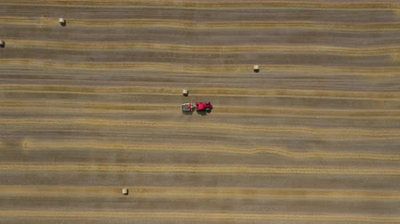 dairesel : Aerial view of haymaking processed into round bales. Red tractor works in the field Stok Video