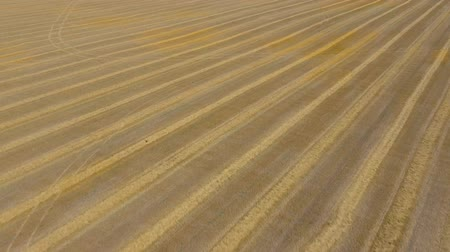 dairesel : Aerial view of the field after harvest Stok Video