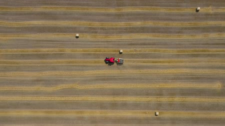 rijp : Aerial view of haymaking processed into round bales. Red tractor works in the field Stockvideo