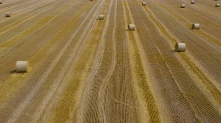 altura : Flight over the field during haymaking. Round haystacks are scattered across the field Stock Footage