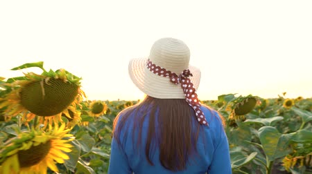 arka görünüm : Woman in a blue dress and hat walks among the sunflowers across the field. Back view. Agriculture