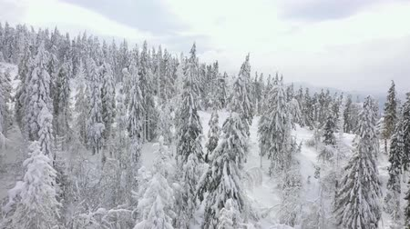 sprookje : Aerial view of snow covered trees in the mountains in winter Stockvideo