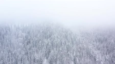 snow covered spruce : Flight over snowstorm in a snowy mountain coniferous forest, foggy unfriendly winter weather. Filmed at various speeds: normal and accelerated