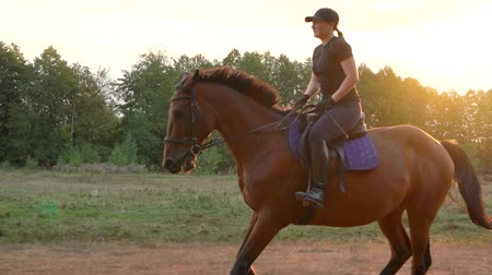 terbiye : Woman riding horse by gallop at sunset. Horseback riding in slow motion.