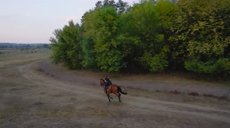 konie : View from the height of woman riding a brown horse by gallop outdoors