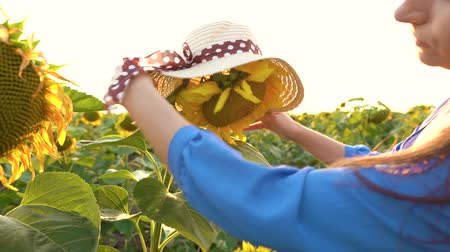 nicely : Woman in a blue dress puts on a straw hat on a sunflower in the field at sunset. Agriculture