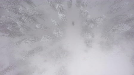 meseország : Aerial view of a snowmobile that rides in the middle of a fabulous snowy forest. Stock mozgókép