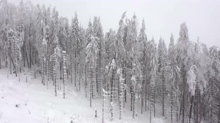 meseország : Aerial view of snow covered trees in the mountains in winter Stock mozgókép