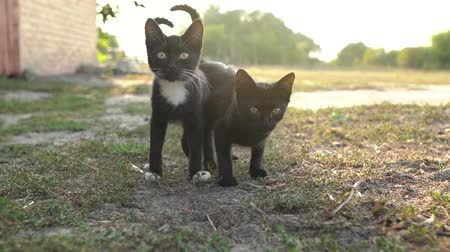 любопытство : Portrait of homeless cute black and white kittens outside Стоковые видеозаписи