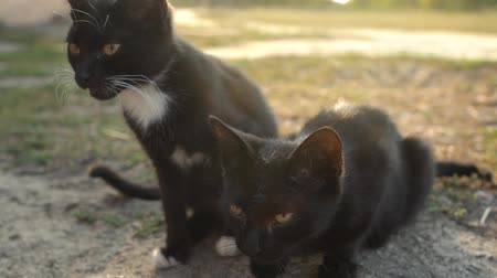 любопытство : Portrait of homeless cute black and white kittens outside. Slow motion Стоковые видеозаписи