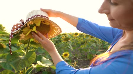 szalma : Woman in a blue dress puts on a straw hat on a sunflower in the field at sunset. Agriculture
