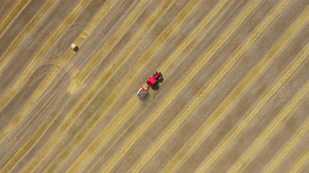 palheiro : Aerial view of haymaking processed into round bales. Red tractor works in the field Vídeos