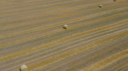 work at height : Flight over the field during haymaking. Round haystacks are scattered across the field Stock Footage