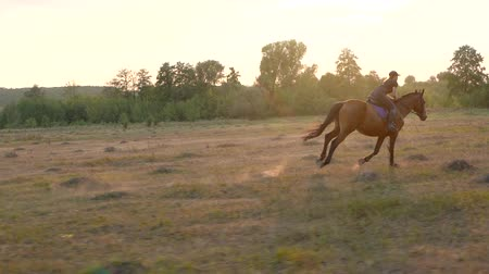 dizgin : Woman riding horse by gallop at sunset. Horseback riding in slow motion.