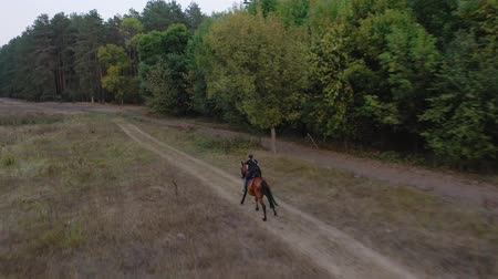 lő : View from the height of woman riding a brown horse by gallop outdoors
