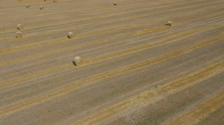 palheiro : Flight over the field during haymaking. Round haystacks are scattered across the field Stock Footage