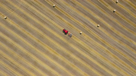palheiro : Aerial view of haymaking processed into round bales. Red tractor works in the field. Shot at different speeds - normal and accelerated