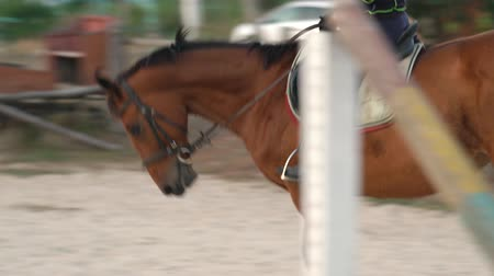 herélt ló : Horsegirl rides gallop on a brown horse in the outdoors sand arena. Competitive rider training dressage in manege