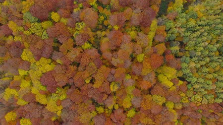 altura : View from the height on a bright autumn forest as a background