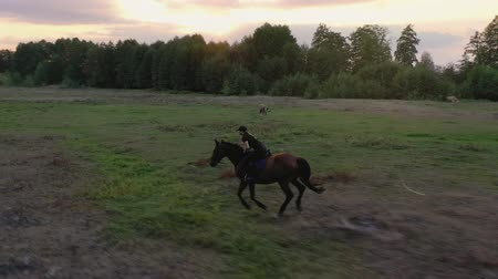 galope : Aerial view of woman riding horse by gallop through a meadow at sunset. Horseback riding in slow motion.