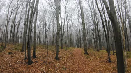 kontrolovány : FPV drone flight through an autumn forest in foggy weather