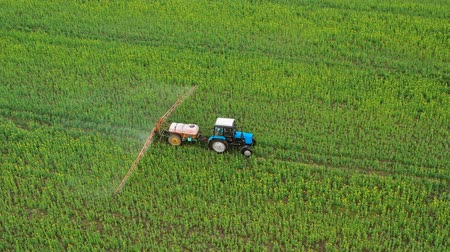 орошение : Aerial view of tractor sprays fertilizer on agricultural plants on the rapeseed field Стоковые видеозаписи