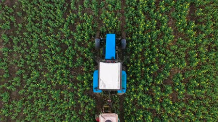 sow : Top view of tractor sprays fertilizer on agricultural plants on the rapeseed field Stock Footage