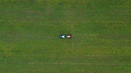 орошение : Top view of tractor sprays fertilizer on agricultural plants on the rapeseed field Стоковые видеозаписи