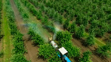 carcinogenic : Aerial view of the Sprayer for Applying Fungicides in the Apple Orchard.Slow Motion.