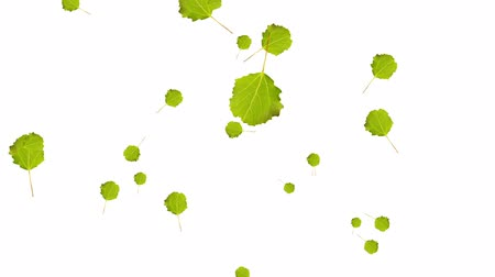listki : Animation of falling green leaves. Autum video on the white background. Full HD resolution. Wideo