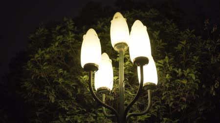 lantaarnpaal : Night Pillar Lights voor Green Tree