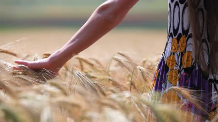 pszenica : womans hand moving through wheat Wideo
