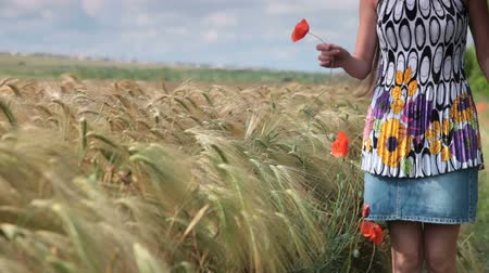 brown dress : woman with a poppy in the Golden wheat field