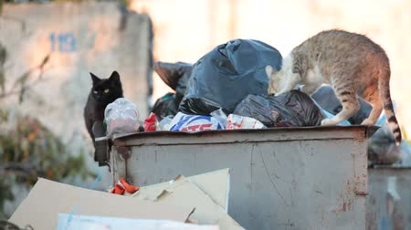 hajléktalan : homeless hungry cat in garbage bins