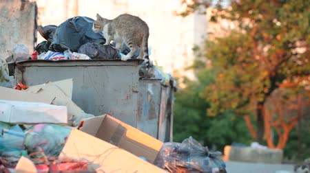 může : homeless hungry cat in garbage bins