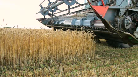 хлеб : Combine harvester in wheat field Стоковые видеозаписи