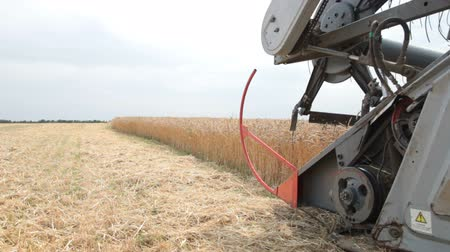pszenica : Combine working on a wheat field Wideo