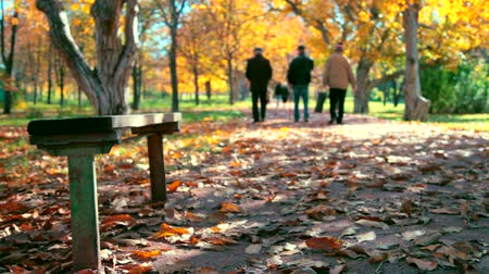 diferansiyel odak : People are walking in autumn park Stok Video