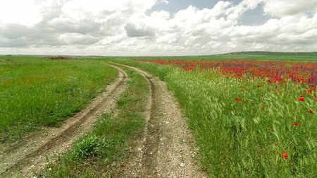 yolları : Country winding road through the summer blooming field Stok Video