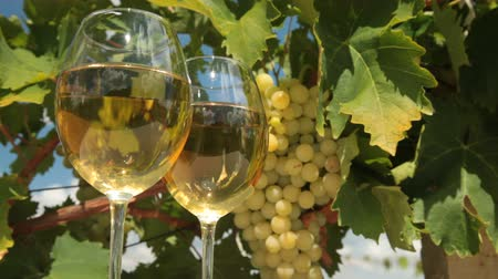 winnica : White Wine Glasses in Vineyard
