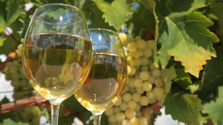 espumante : Two glasses of wine and bunch of muscat white grapes Vídeos