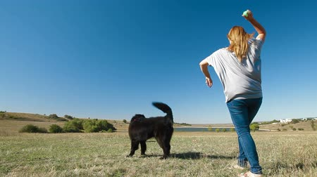 rescue dog : Young woman training the Newfoundland dogs outdoors
