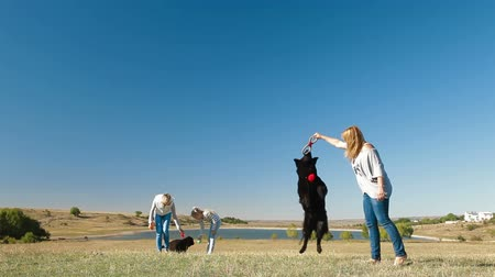 rescue dog : People with Newfoundland dogs playing on the nature