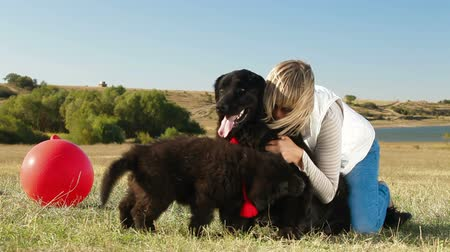 evcil hayvanlar : Young Woman Having Fun With Their Newfoundland Dogs Outdoor Stok Video